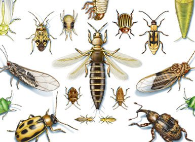 Insect IQ Quiz